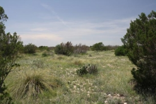 Crockett County, Texas (2)